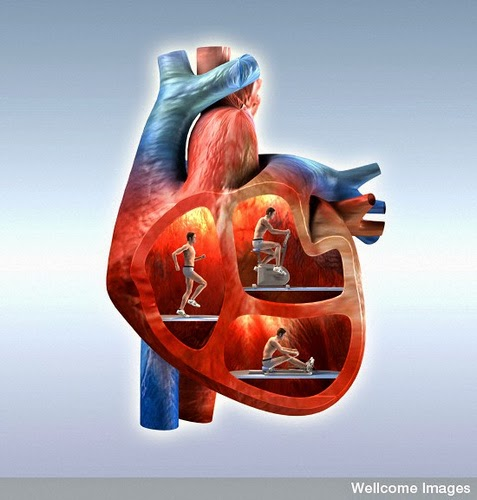 Fitness-_Exercise_For_A_Healthy_Heart-3